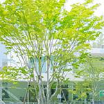 Art Museum & Library, Ota as animation background (アニメみたいな太田市美術館・図書館)