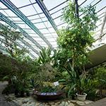 Botanical garden in