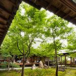 Courtyard of Kenninji Temple (建仁寺・潮音庭)