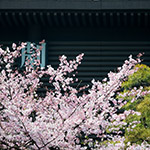 Detail of National Theatre of Japan (国立劇場)