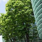 Detail of The National Art Center, Tokyo (国立新美術館)