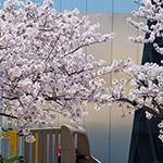 2018-03-28_details_of_the_sumida_hokusai_museumphoto_41227584561