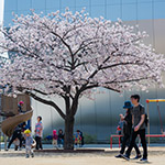 Exterior view of The Sumida Hokusai Museum (すみだ北斎美術館)