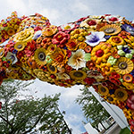 Flower Horse and Towada Art Center (十和田市現代美術館)
