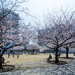 Full view of The Sumida Hokusai Museum (すみだ北斎美術館)