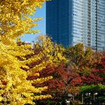 Full view of Tokyo Midtown Hibiya (東京ミッドタウン日比谷)
