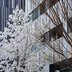 2018-03-25_girl_taking_photos_in_akagi_shrine_park_court_kagurazakaphoto_39631123380