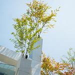 Peak of Omotesando Branches (表参道ブランチーズ).