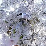 Self portrait into sakura storm at Akagi Shrine, Park Court Kagurazaka (赤城神社、パークコート神楽坂)