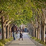 Sidewalk at Toyosu (歩道にて)