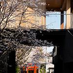 Small shrine in Akagi Shrine, Park Court Kagurazaka (赤城神社、パークコート神楽坂)