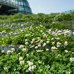 Terrace space of Kanda University of International Studies, building 7 (神田外語大学 7号館)