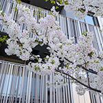 Upward view of Akagi Shrine, Park Court Kagurazaka (赤城神社、パークコート神楽坂)