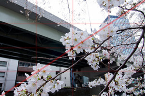 首都高と桜。対角構図_christinayan