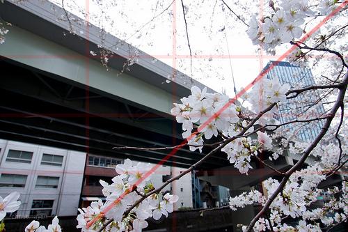 首都高と桜。3/4対角構図_christinayan